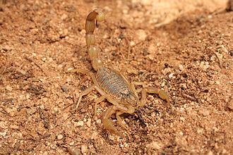• 1. Scorpion Credit Alvaro Rodriguez Alberich