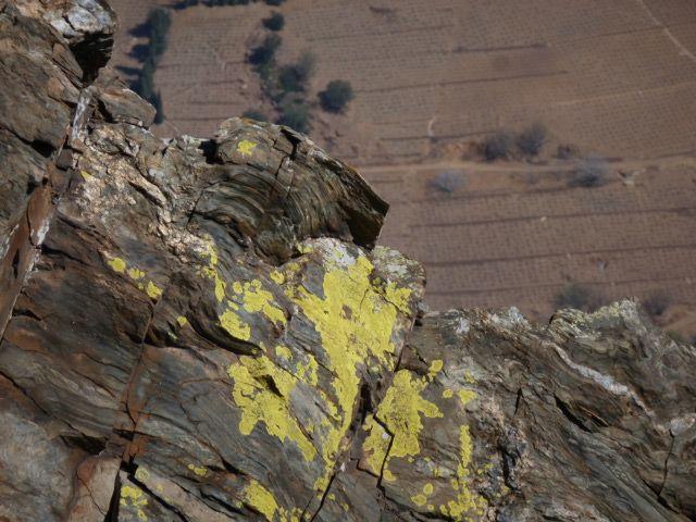 Fluroescent lichen