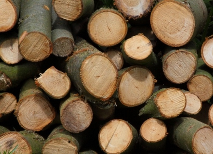 CHOOSING YOUR WOOD FOR YOUR WOOD BURNER