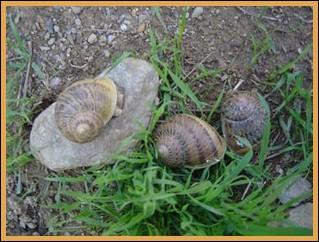 snails in france