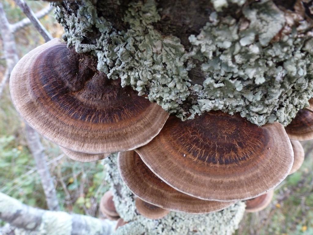 Lichen and fungi on dead tree