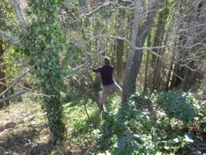 Olivier_forest_2