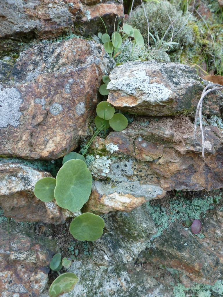 Plant in crevice
