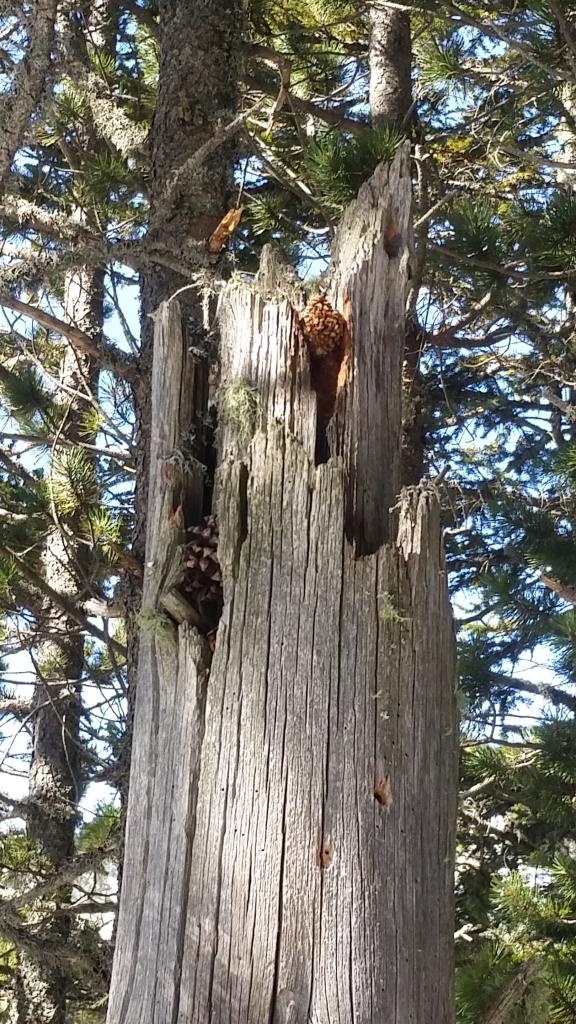 Woodpecker anvil (3)