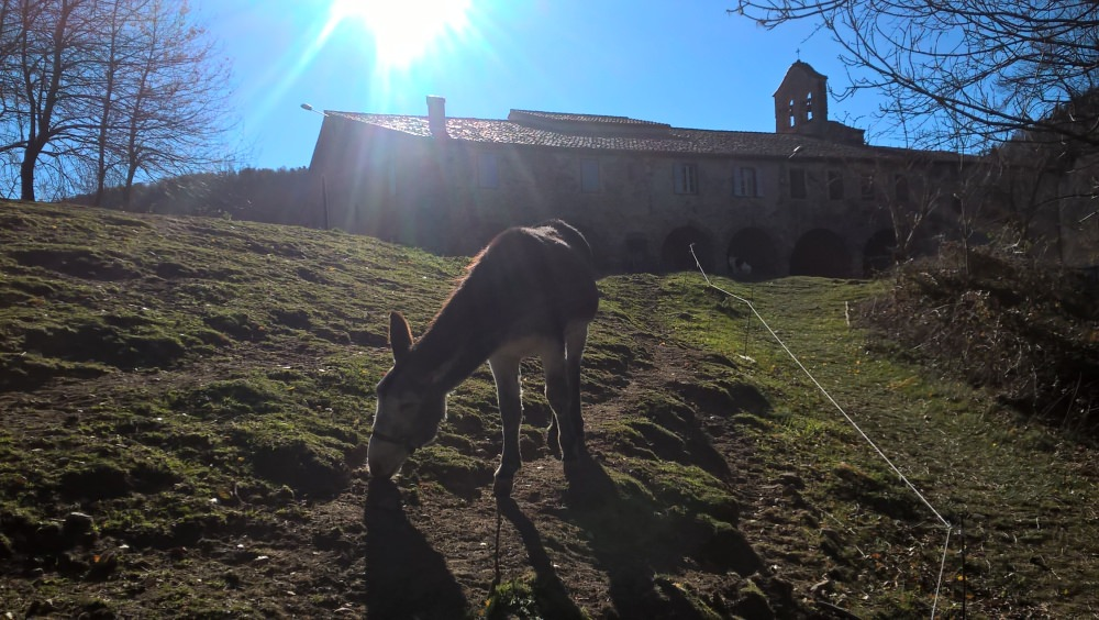 Catalan donkey where the trail reaches the Ermitage de Notre Dame du Coral