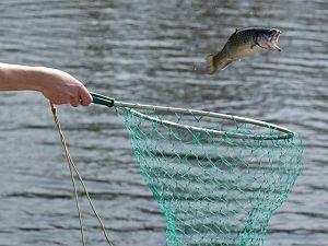 fish_net