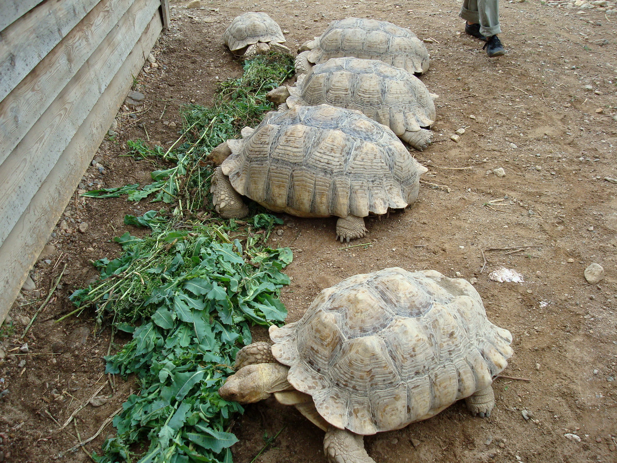 Vallé des tortues