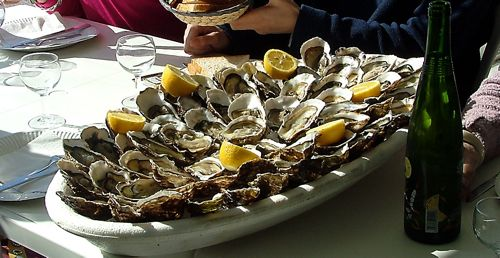 oysters in Leucate