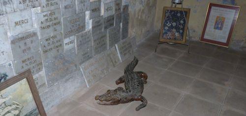 Crocodiles in Collioure