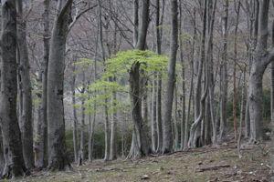 La Réserve naturelle nationale de la forêt de la Massane