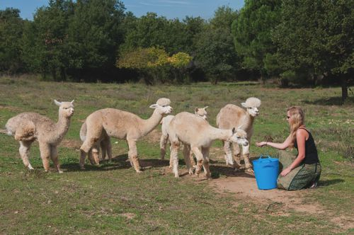 Me and my girls – Alpacas in the P-O