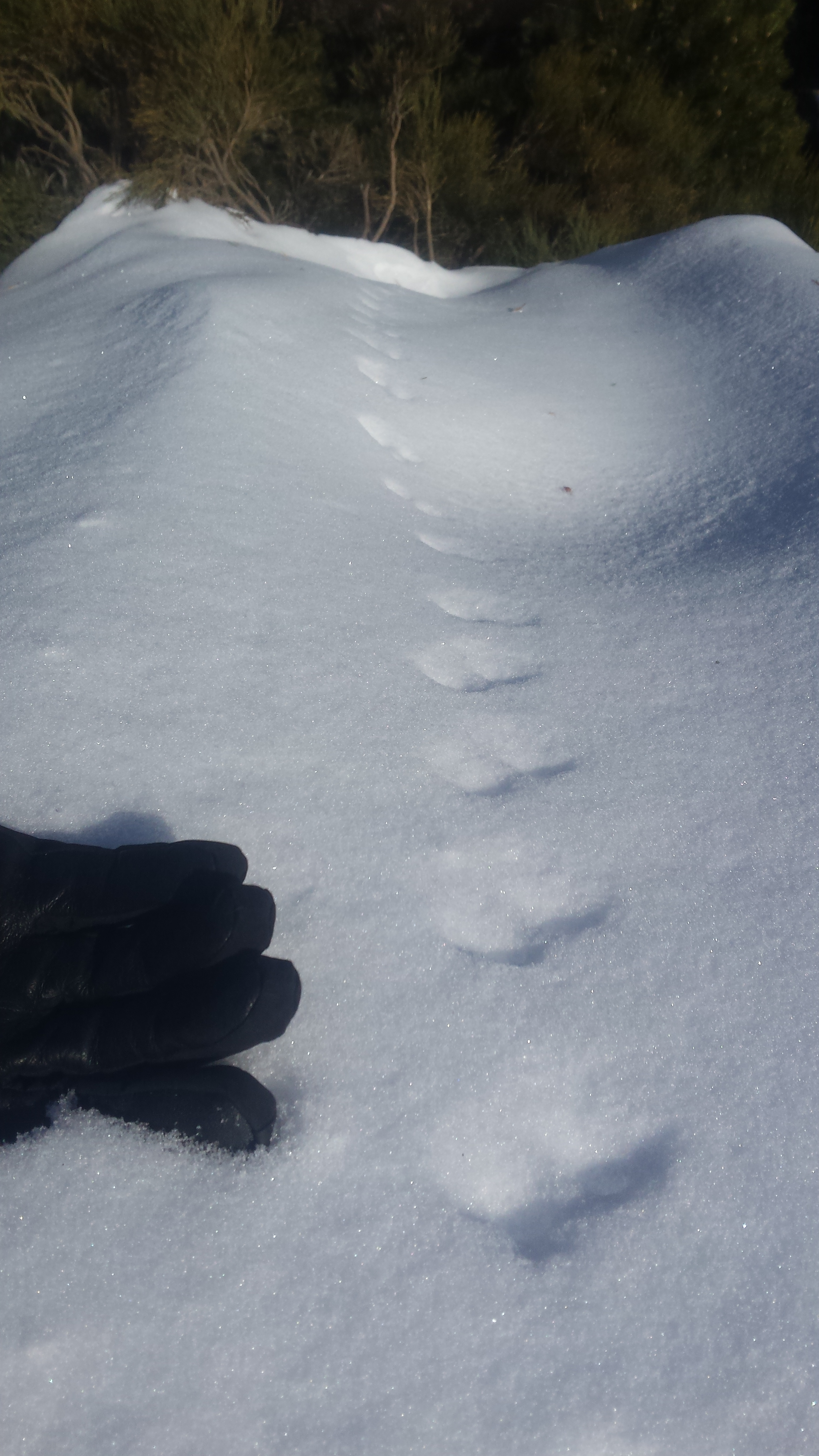 stoat track