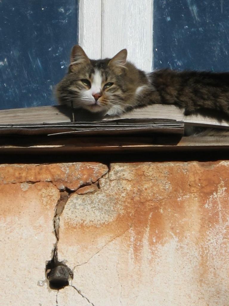 Noisette, the guard-cat
