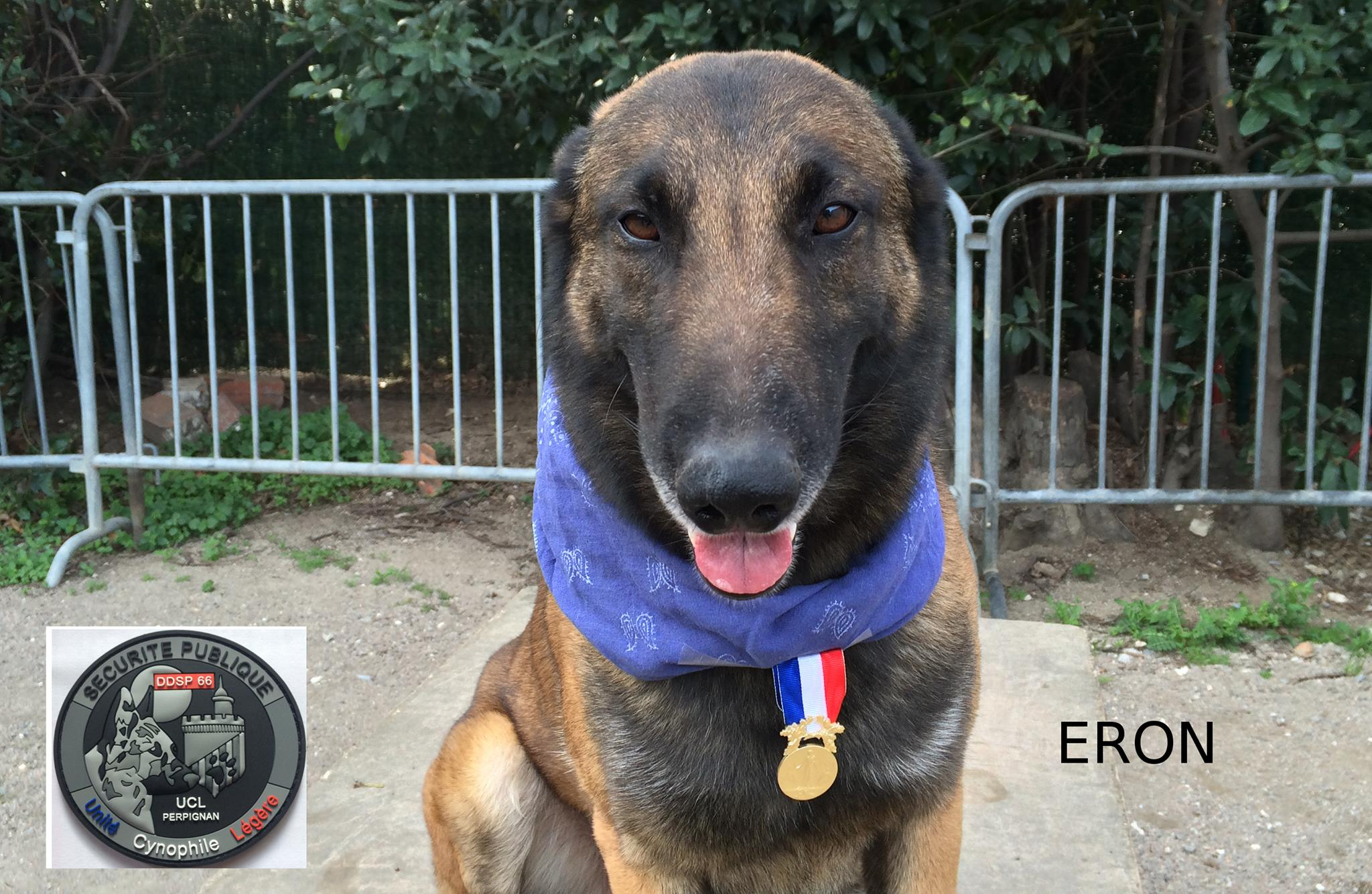 Eron, French police sniffer dog,