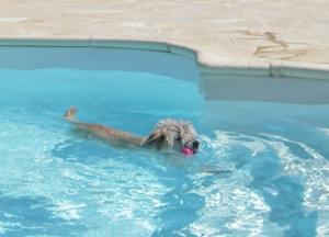 Bisou Pool