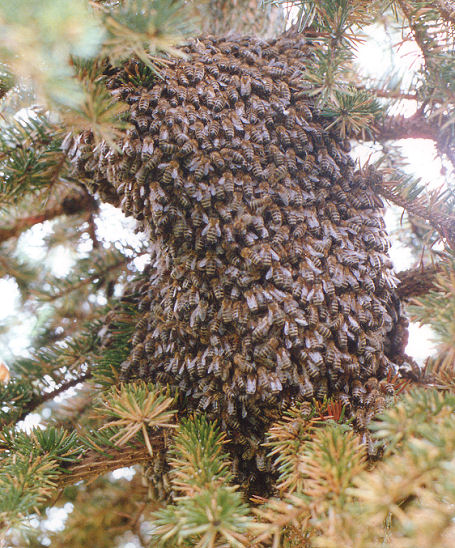 honey bees stir and the colony starts to grow