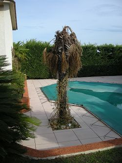 The palm tree!