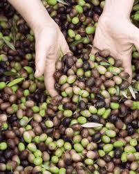 Olives Mas Boutet