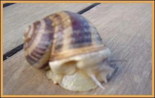 Snail farms in France