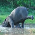 Mabula doing Downward Elephant yoga position
