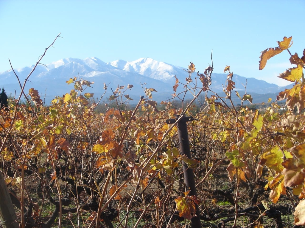 vines and canigou