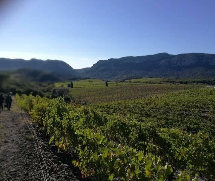 vignerons agly