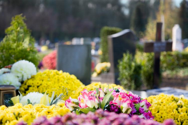 Chrysanthemums and graves in France