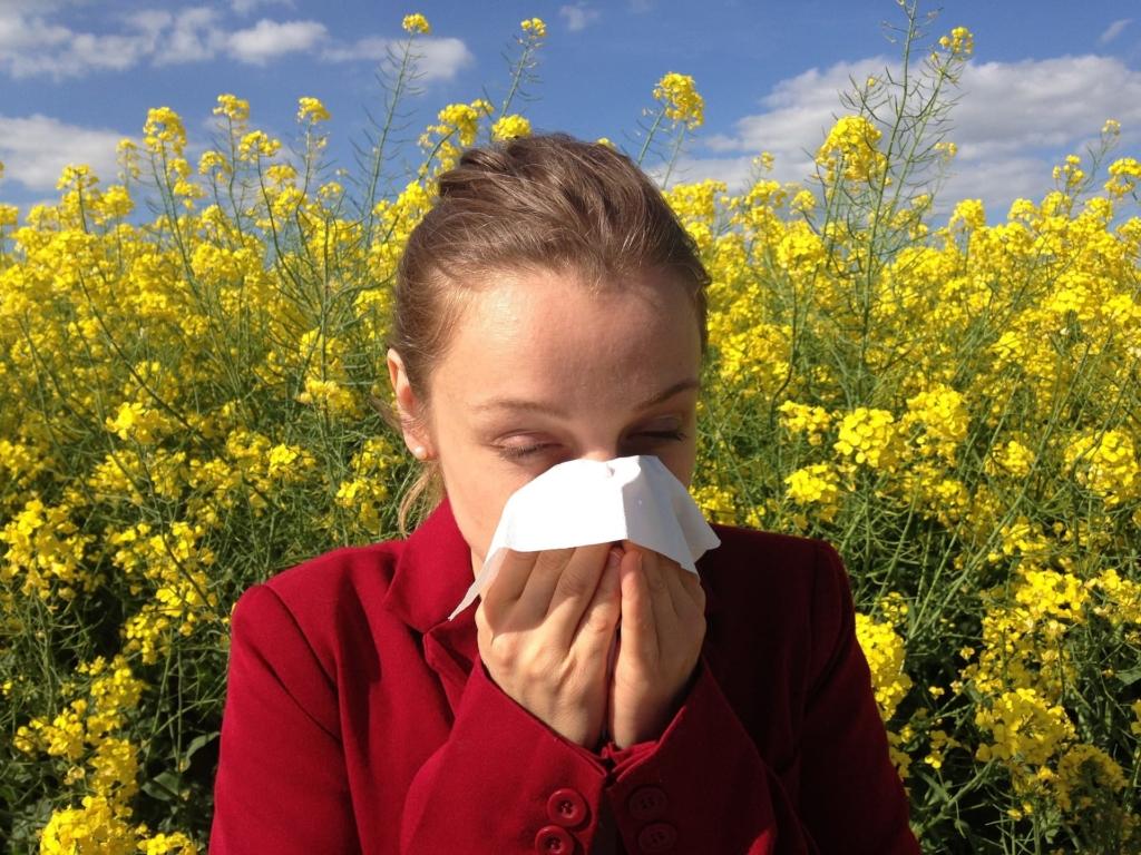 allergy hayfever