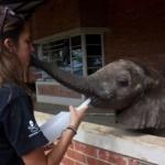 Baby elephant with Megan Richards