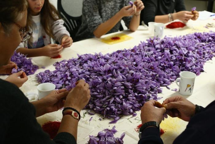 Saffron émondage (14)