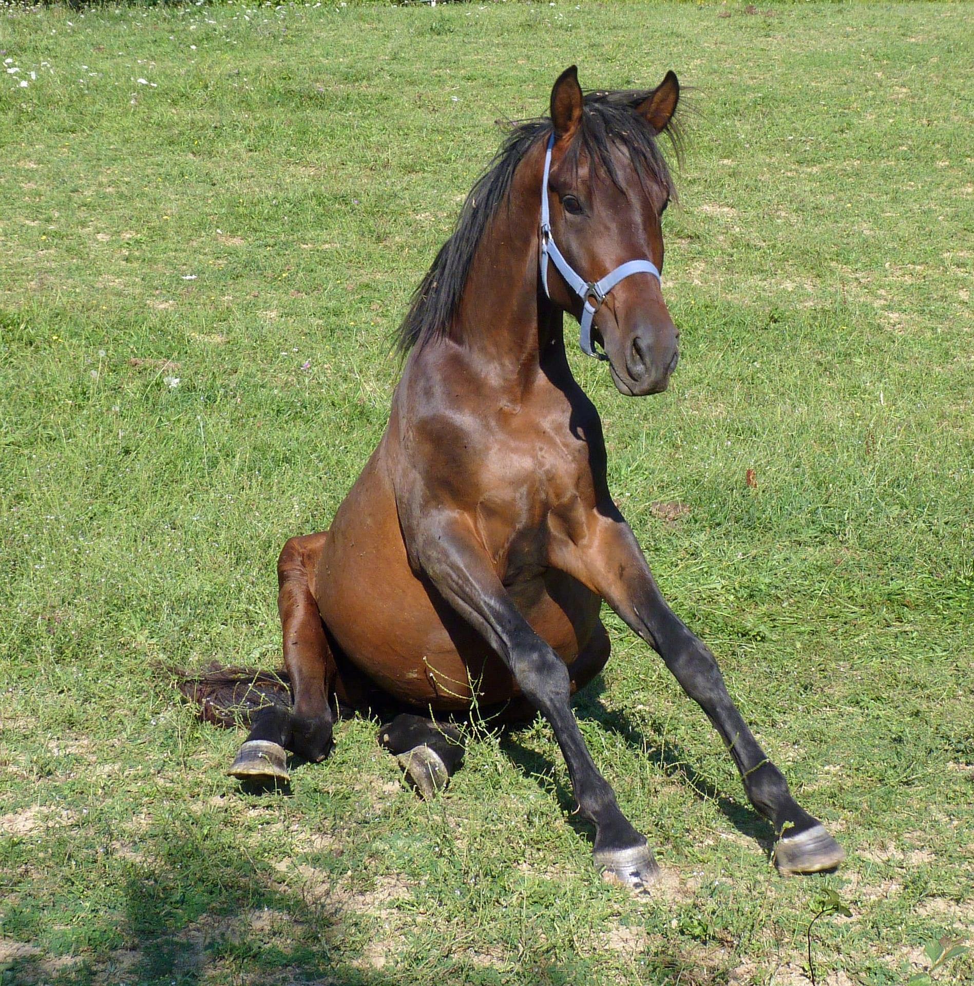 horse-1665672_1920 - P-O Life