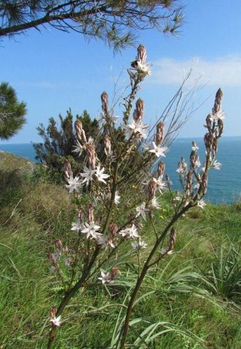 Walk 10: Banyuls-sur-Mer to Port Vendres by Sentier Littoral
