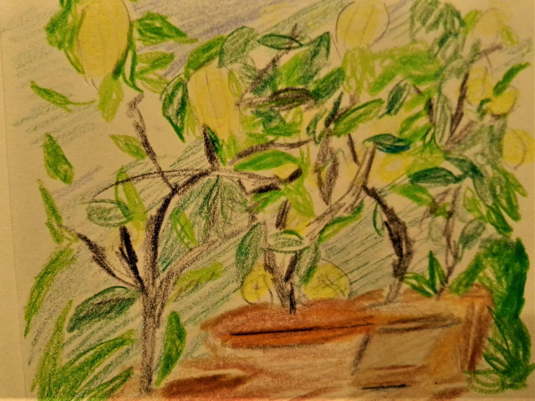 lemon plants observations