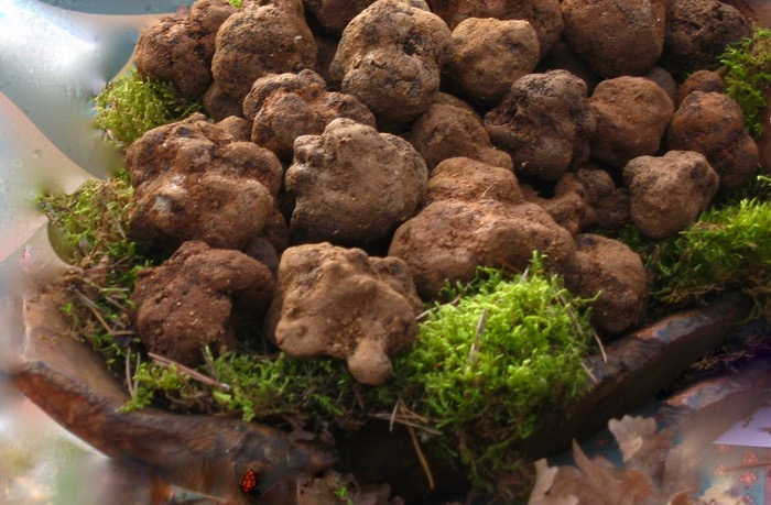 truffle-market