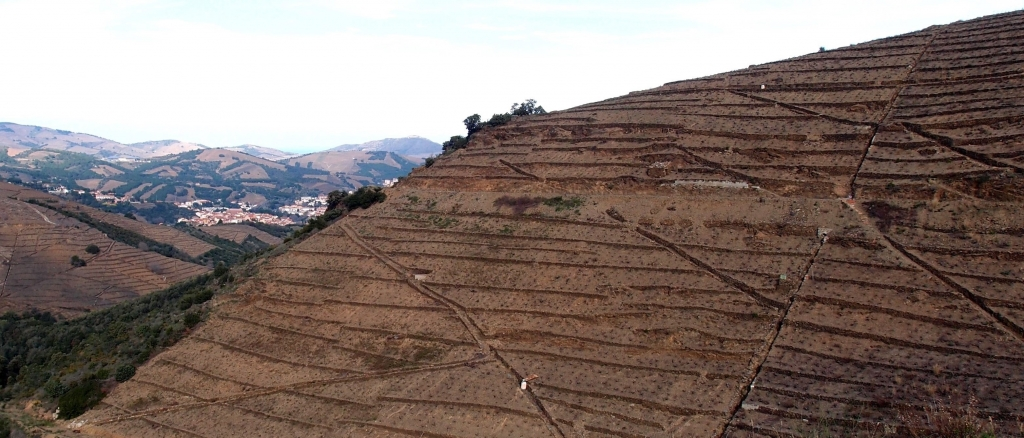 The commune of Banyuls has some of the steepest sloping vineyards in the region